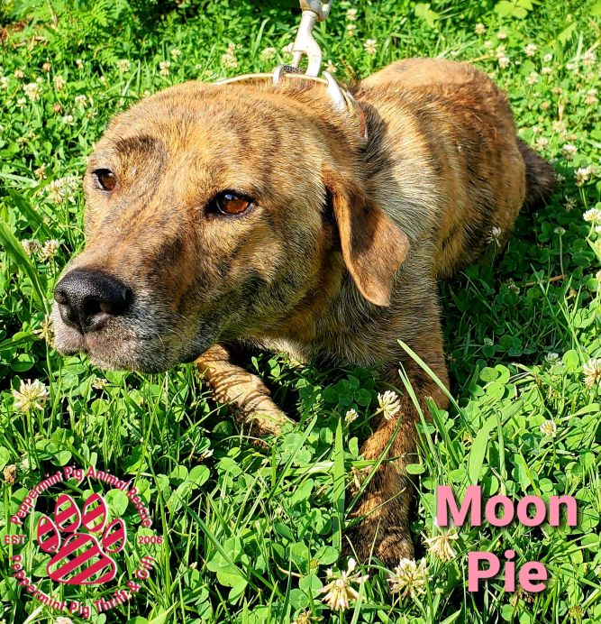 Moon Pie ADOPTION PENDING