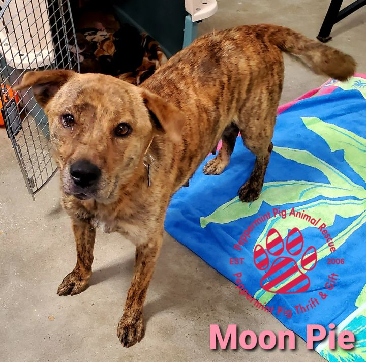 Moon Pie ADOPTION PENDING 5