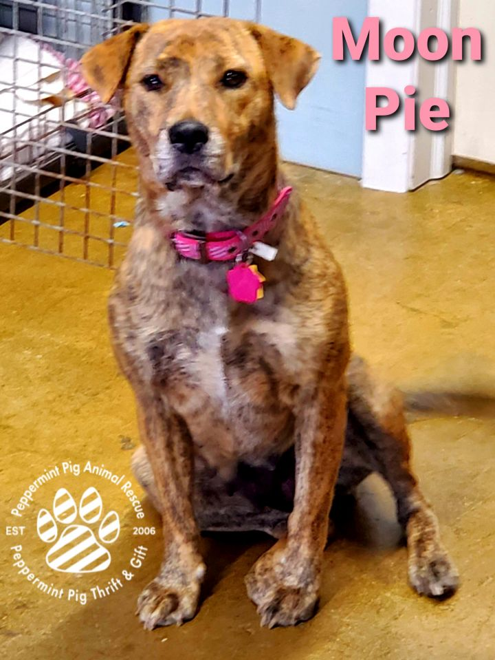Moon Pie ADOPTION PENDING 6