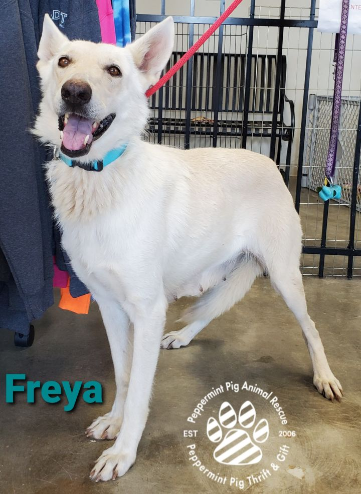 Freya 3