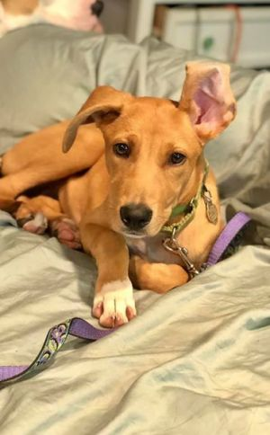 5 months old Lillian The last of her litter looking for a forever home Would prefer she be placed