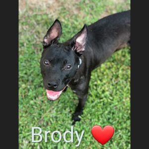 Hi My name is Brody I am the coolest 9 month old youll ever meet I love to play in