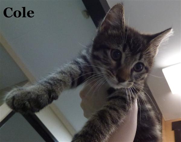 Cole 4