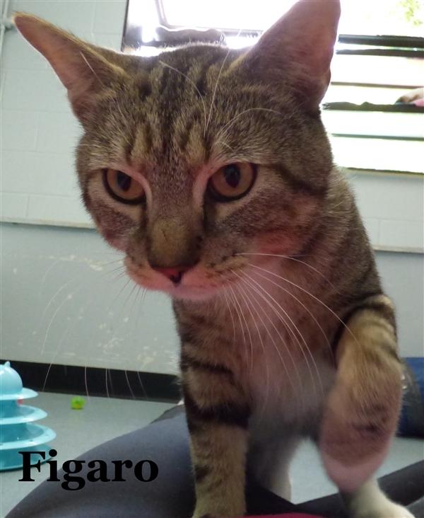 Figaro 4