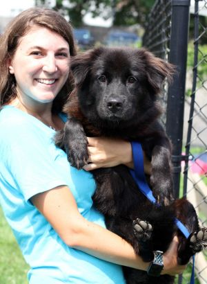 Barb is a sweet and a little shy Flat Coated Retriever Mix who loves being petted and brushedand b