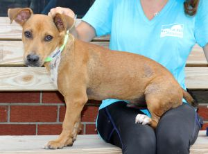 Guava is an adorable Dachshund mix about 10 months old and 25 lbs He was abandoned in an isolated