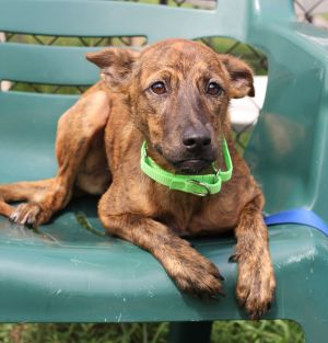 Giggles is a sweet lovely puppy Despite having a rough start in life she remains affectionate and