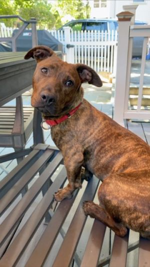 Jane is a 14 pound 6 month old lab mix puppy If there is one word to best describe this