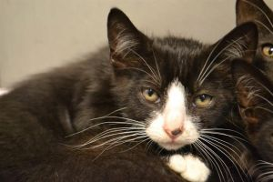 If you would like to meet me or another pet please visit humanebrowardcom The