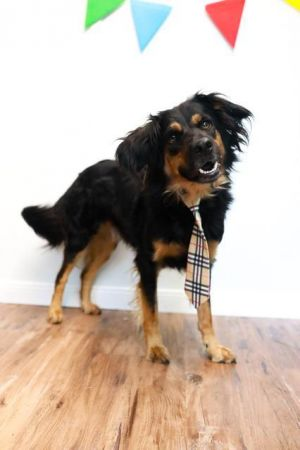 Marty is a super sweet boy that loves to be with his humans He is medium energy and good on