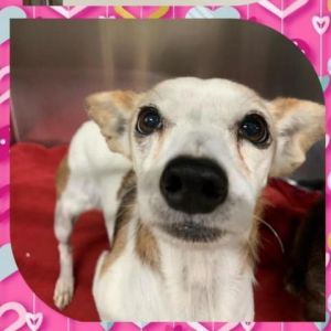 Lily Mae was an owner surrender to our shelter due to the health of the owner S