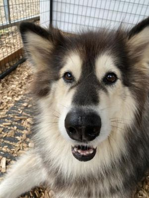 You can fill out an adoption application online on our official websiteInterested in adopting See