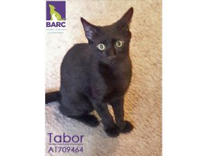 This handsome young guy is Tabor Most of his time is spent chasing and wrestling his foster brother