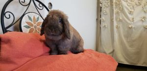 If you are interested in adopting Brer Rabbit please inquire here on Petfinder or contact us at inf