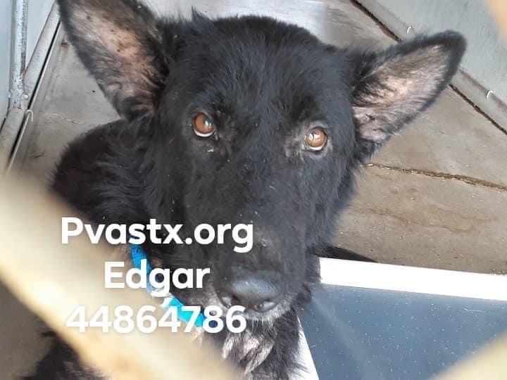Edgar 2