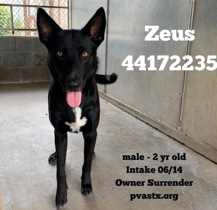 Zeus, an adopted German Shepherd Dog Mix in Jefferson City, MO