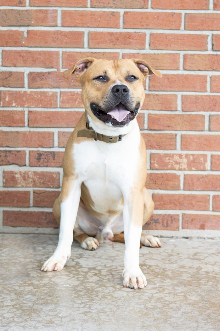HANK, an adoptable Mixed Breed in Cape Girardeau, MO
