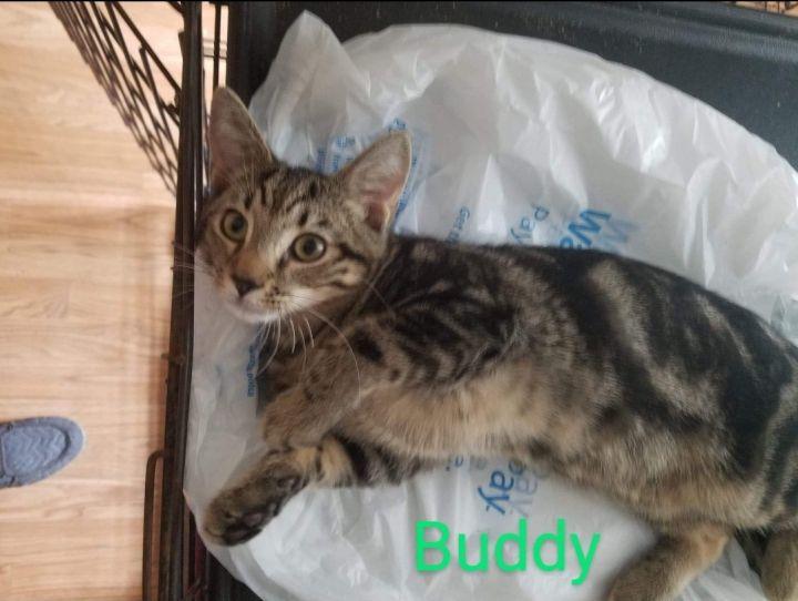 Buddy 3