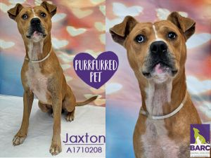 What a friendly happy boy Jaxton is He loves hanging out with staff at the shelter and has enjoyed