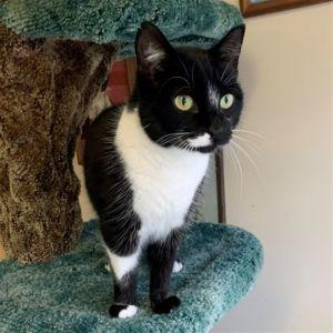 ?bust=1599593558&width=300 - Adopt a Cat