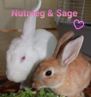 NUTMEG AND SAGE SOMETIMES OPPOSITES REALLY DO ATTRACT How could you resist these faces These girls