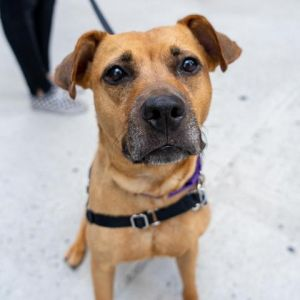 Lucky is a sweet and energetic girl who LOVES her people Lucky is used to having someone around a l