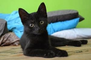 My name is Midnight I am a 5 month old kitten My favorite place is the window sill but I