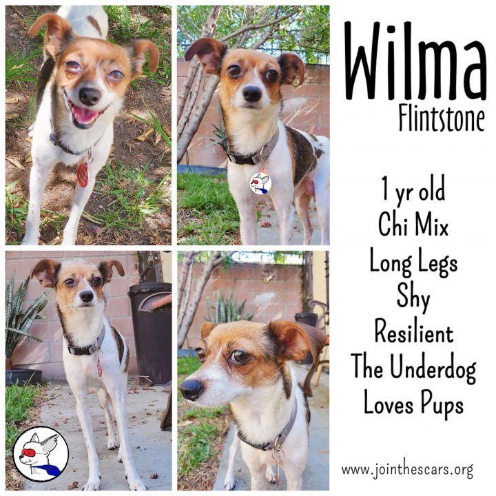 Wilma Flintstone 2
