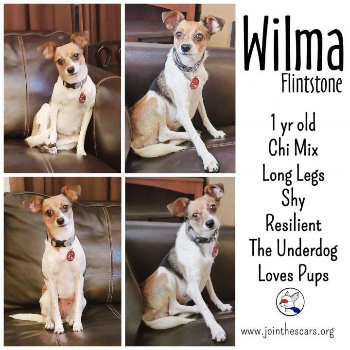 Wilma Flintstone 3