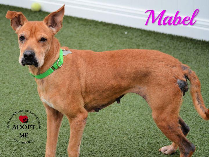 Mabel 3