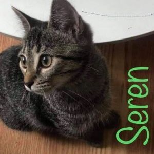 Seren ( must be adopted with Murphee)
