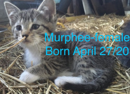 Murphee ( must be adopted with Seren) 2