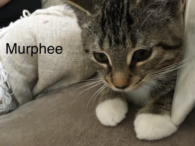 Murphee ( must be adopted with Seren) 1