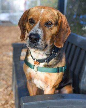 ?bust=1599593677&width=300 - Adopt a Dog