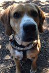 ?bust=1599593677&width=100 - Adopt a Dog