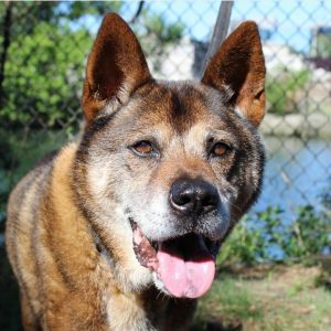 TO APPLY GO TO wwwLuckyDogRefugecom Meet Dingo An older gent around 13years Dingo became a lu