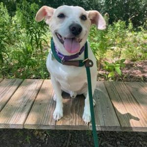 Meet Chevy Chevy an eight-year-old hound mix who identifies completely with Oscar the Grouch Chevy
