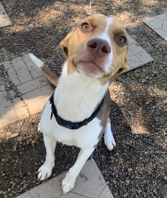 Poke, an adoptable Mixed Breed in Minot, ND