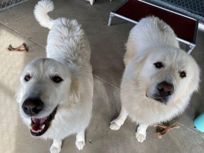 Bella & Teddy