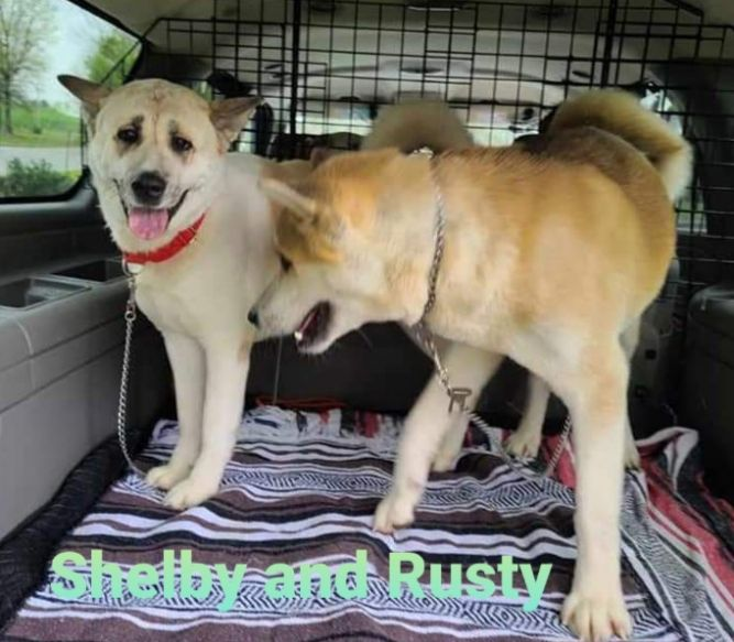 Shelby and Rusty