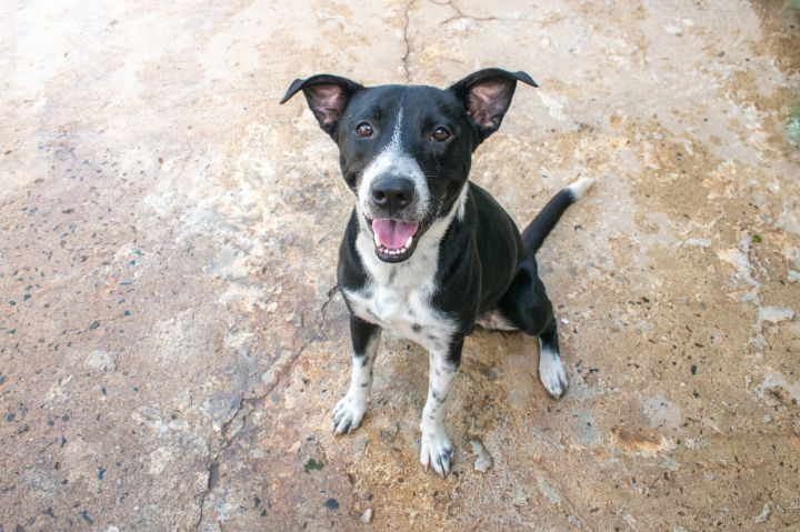 Jacco, an adoptable Mixed Breed in Loiza, PR