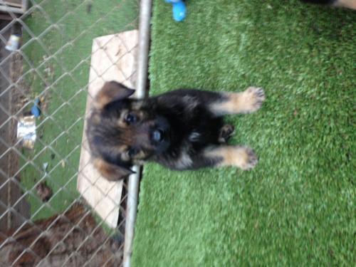 Catcher-puppy 1