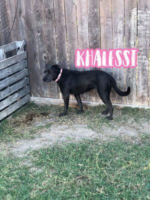 KHALESSI