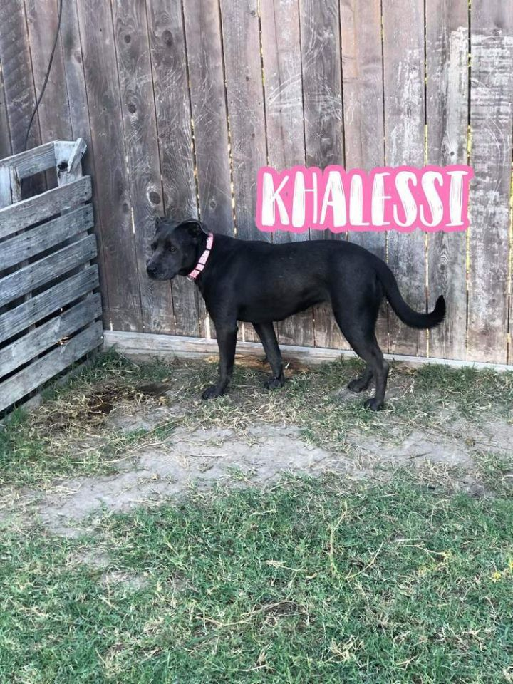 KHALESSI 1