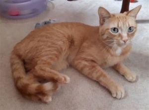 ?bust=1597702266&width=300 - Adopt a Cat