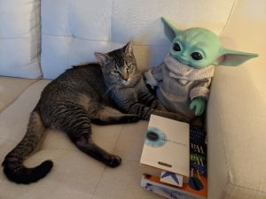 Youve heard of Roscoe the bed bug dog Meet George the fly catching cat Moments after arriving at