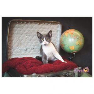 Cats For Adoption Near Jane Lew Wv Petfinder