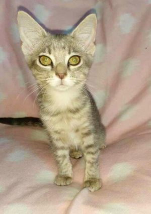 Brook is a beautiful little sweetheart Quiet and laid back She loves pets and cuddling if she is n