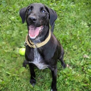 Sweet Pea is an adorable 6-month-old pup looking for her forever home She was adopted from DAWS at