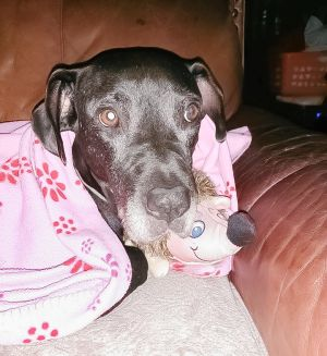 Blue and his sister Lady lived on chains for 13 years Ladys health was deter